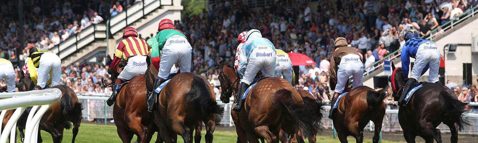A view from behind as several Racehorses head towards the finishing line.